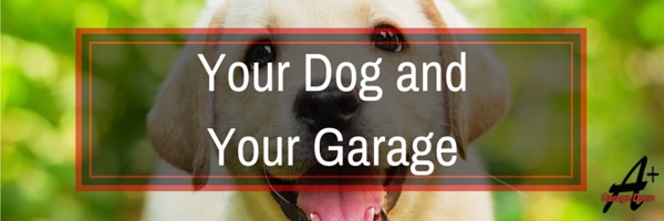 Doggy Garage: How to Keep Your Pet Safe!